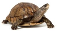 Image of turtle for quotes about courage