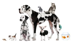 Image of group of dogs, cats, reptiles, small animals & fish