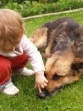 Image of child petting dogs nose